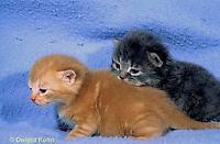 SH31-001z  Cat - kittens 16 days old