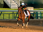 April 27, 2021: Search Results, trained by trainer Chad Brown, exercises in preparation for the Kentucky Oaks at Churchill Downs on April 27, 2021 in Louisville, Kentucky. Scott Serio/Eclipse Sportswire/CSM