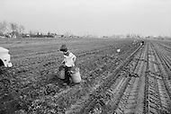 Young boy works on a farm in California - Child labor as seen around the world between 1979 and 1980 – Photographer Jean Pierre Laffont, touched by the suffering of child workers, chronicled their plight in 12 countries over the course of one year.  Laffont was awarded The World Press Award and Madeline Ross Award among many others for his work.