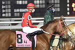 January 16, 2021: Red N Wild in the Lecomte Stakes Day at Fair Grounds Race Course in New Orleans, Louisiana. Parker Waters/Eclipse Sportswire/CSM