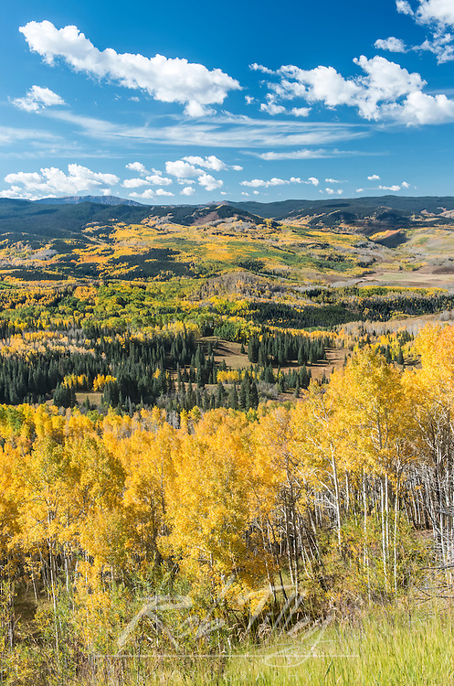 USA, CO, Routt NF, Autuman Color in the Flat Tops Wilderness