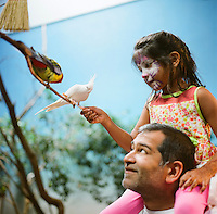 Sara Hussaini, age 6, and her father Akbar Hussaini from Austin, Texas feed Australian parrots seeds on a stick at the Woodland Park Zoo. This display features more than 150 parrots in a 1,200 square foot space. This collection of birds features budgerigars (parakeets), cockatiels, and rosellas. These species are abundant in Australia's though the zoo points out other parrot species are at risk. (photo Karen Ducey)