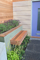 Fragrant garden plant Lavandula lavender in bloom planted at front door entranceway of house with garden seat bench to enjoy scented fragrant plants