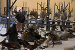 Trophy hunted animals in taxidermy shop, South Africa