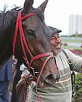 HALLANDALE BEACH, FL -DECEMBER 03:    #5 Tormenta de Oro (FL) leaves the  winners' circle of the $110K  Claiming Crown Glass Slipper Stakes, with his groom, at Gulfstream Park on December 03, 2016 in Hallandale Beach, Florida. (Photo by Liz Lamont/Eclipse Sportswire/Getty Images)