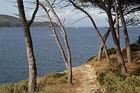 - gulf of Porto Azzurro (Island of Elba), vegetation of marine pines ....- golfo di Porto Azzurro  (Isola d'Elba), vegetazione di pini marittimi