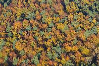 4415/ Herbstwald:DEUTSCHLAND, SCHLESWIG- HOLSTEIN 27.10.2005:Sachsenwald, Wald, Mischwald, Baumkronen, Laubfaerbung, Indiansummer, Luftbild