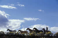 Cowboy herding horses. Ponderosa Ranch. Senaca OR.