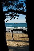 Sand Beach in Acadia National Park, viewed between two trees.