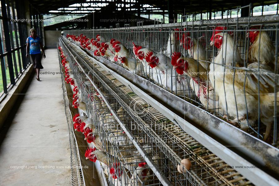 NIGERIA, Oyo State, Ibadan, egg layer hens  / Legehennenhaltung