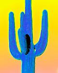 Saguaro #32