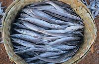 INDIA Tamil Nadu Nagapattinam, coast fishermen, fish in basket / INDIEN Nagapattinam, Kuestenfischer, Fisch im Korb