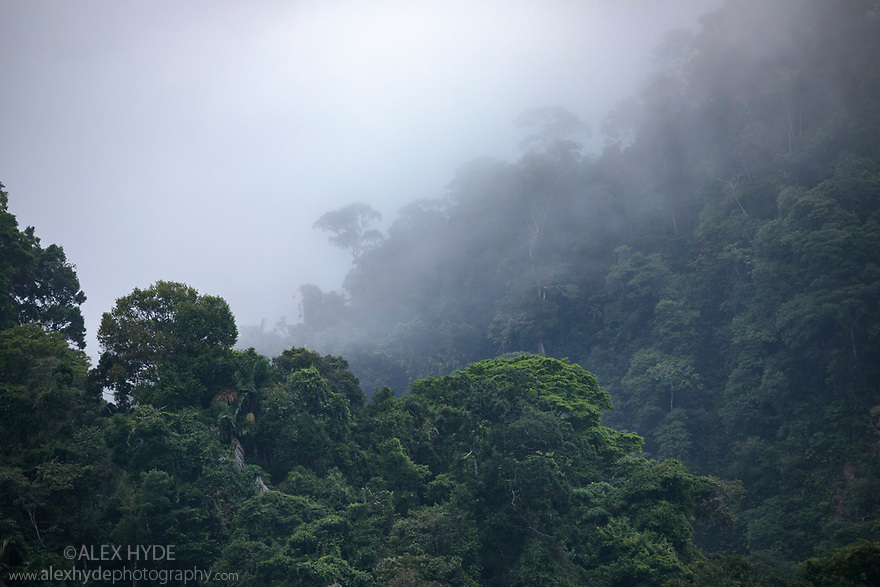 Lowland rainforest, Manu Biosphere Reserve, Amazonia, Peru. November.