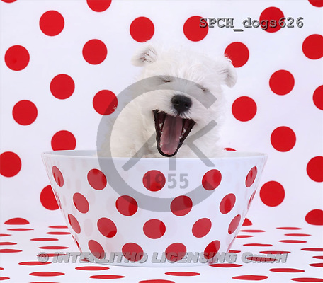 Xavier, ANIMALS, dogs, photos(SPCHdogs626,#A#) Hunde, perros