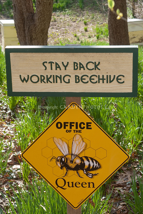 Beehive signs near beehives, Stay Back Working Beehive, Office of the Queen, funny beekeeping signs near hives