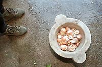 cascina Pirola, a Zelata di Bereguardo (PV), Agricoltura Biodinamica,filosofia antroposofica di Rudolf Steiner. Gusci d'uovo per il loro contenuto di silicio importante componente fertilizzante