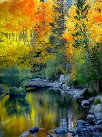 Fall colored aspens along Bishop Creek, California. Inyo County. Eastern Sierra Nevada Mountins