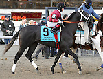 Cairo Prince (no. 9), ridden by Luis Saez and trained by Kiaran McLaughlin, runs in the 100th running of the grade 2 Remsen Stakes for two year olds on November 30, 2013 at Aqueduct Race Track in Ozone Park, New York.  (Bob Mayberger/Eclipse Sportswire)
