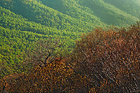 Spring vista in early light, The Priest Wilderness, George Washington National Forest, Virginia