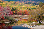Fall foliage on the Penobscot River in Baxter State Park, Piscataquis County, ME, USA
