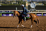October 30, 2019: Breeders' Cup Mile entrant Uni, trained by Chad C. Brown, exercises in preparation for the Breeders' Cup World Championships at Santa Anita Park in Arcadia, California on October 30, 2019. Carolyn Simancik/Eclipse Sportswire/Breeders' Cup/CSM