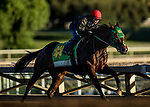 ARCADIA, CA - OCTOBER 22: Bolt d'Oro and his jockey Corey Nakatani workout in preparation for the Breeders' Cup Juvenile Stakes, at Santa Anita Park on October 22, 2017 in Arcadia, California. (Photo by Alex Evers/Eclipse Sportswire/Getty Images)