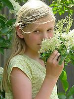 Mädchen, Kind erntet Holunder-Blüten und riecht an den Blüten, Holunderblütenernte, Schwarzer Holunder, Sambucus nigra, Fliederbeeren, Fliederbeere, Common Elder, Elderberry, Sureau commun, Sureau noir