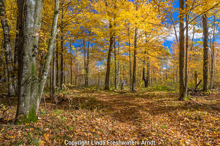 Woodland trail in northern Wisconsin