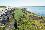 Restored salt marsh grass on Bird Island, Marion, Massachusetts.
