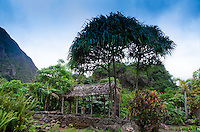 'Iao Valley State Monument, Maui, Hawaii, US