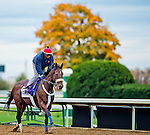 October 26, 2015 :  Wicked Strong, trained by James A. Jerkens and owned by Centennial Farms, exercises in preparation for the Las Vegas Breeders' Cup Dirt Mile at Keeneland Race Track in Lexington, Kentucky on October 26, 2015. Scott Serio/ESW/CSM
