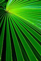 Palm Frond Still-Life