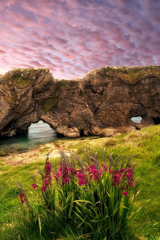 Arches with gladiola flowers. Near Lulworth Cove. Dorset. Jurassic Coast, England