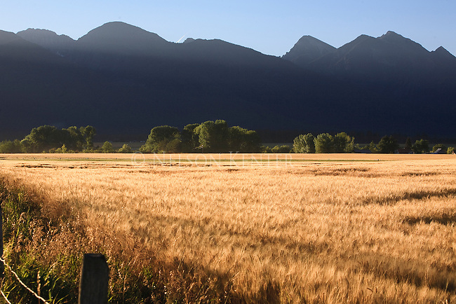 Mission Mountains and wheat field