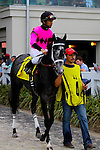 February 21, 2015: West Coast Belle with Shaun Bridgmohan up in the Rachel Alexandra Stakes at the New Orleans Fairgrounds Risen Star Stakes Day. Steve Dalmado/ESW/CSM