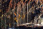 Art Wolfe Workshop, Olympic National Park, Washington, USA