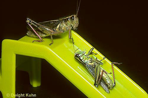 GF12-001a  Funny Grasshoppers - sliding on sliding board