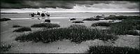 Europe/France/Picardie/80/Somme/Baie de Somme/le Crotoy: Paysage de la Baie de Somme- Charles Derosière myticulteur part avc son tracteur récolter les moules de Bouchot en baie de Somme