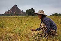 farmgirl in Bagan, Myanmar