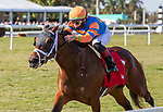 January 23, 2021:  #1 Always Shopping with jockey Irad Ortiz, Jr. on board, wins the La Prevoyante Stakes GIII at Gulfstream Park in Hallandale Beach, Florida.  Liz Lamont/Eclipse Sportswire/CSM