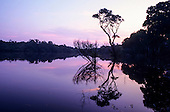 Amazon, Brazil. Rainforest in silhouette with a single tree on a forested river bank reflected in the water at sunset.