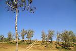 Tel Haror, site of ancient Gerar