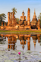 Wat Maha That temple and Buddha statue pond reflections and pink lotus flower in gold sunrise light in the famous Sukhothai Historical Park, Thailand