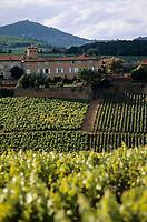 Europe/France/Rhône-Alpes/69/Rhône/Env Pouilly-le-Monial: Vignoble du Beaujolais