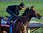 October 27, 2014:  Secret Circle, trained by Bob Baffert, exercises in preparation for the Breeders' Cup Xpressbet Sprint at Santa Anita Race Course in Arcadia, California on October 27, 2014. Scott Serio/ESW/CSM