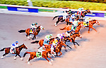 HALLANDALE BEACH, FL - JAN 28: The field passes the stands the first time by  before Arrogate #1, ridden by Mike Smith, wins the $12,000,000 Pegasus World Cup Invitational the Pegasus World Cup Invitational Day at Gulfstream Park Race Course on January 28, 2017 in Hallandale Beach, Florida. (Photo by Scott Serio/Eclipse Sportswire/Getty Images)