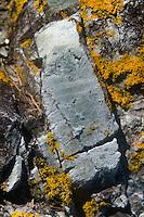 Rock Face with Lichen, Ram Island, Castine, Maine, US