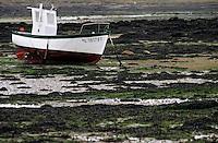 Europe/France/Bretagne/22/Côtes d'Armor/Ile Grande: Bateaux de pêche