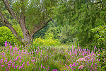 Willows in the meadow at the Arnold Arboretum, Boston, Massachusetts, USA