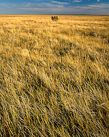 Sunset light on the Pawnee Grassland; Pawnee National Grassland, CO